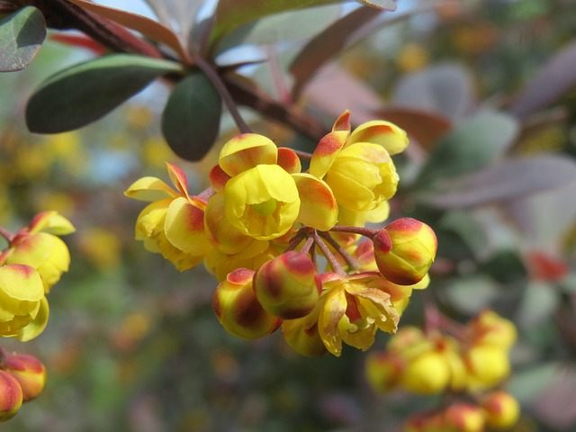 fr hjahrsbl hende str ucher. Black Bedroom Furniture Sets. Home Design Ideas
