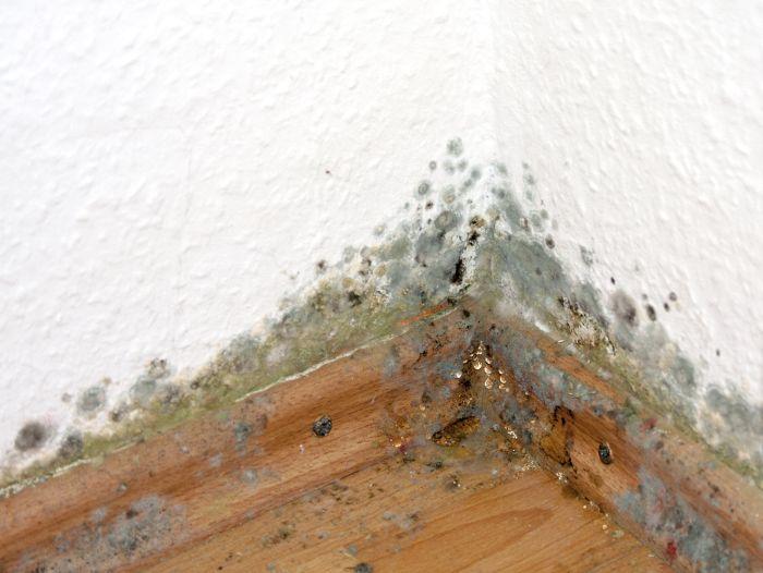 Hausbautipps24 Schimmel in Haus und Wohnung bekämpfen